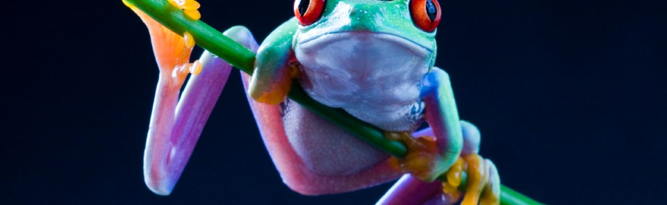 What is music for a frog?