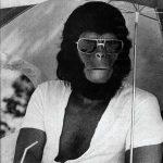 cropped-cropped-aviator-ape.jpg
