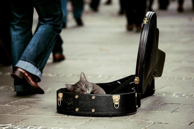 Pretty cat sleeping on a guitar case