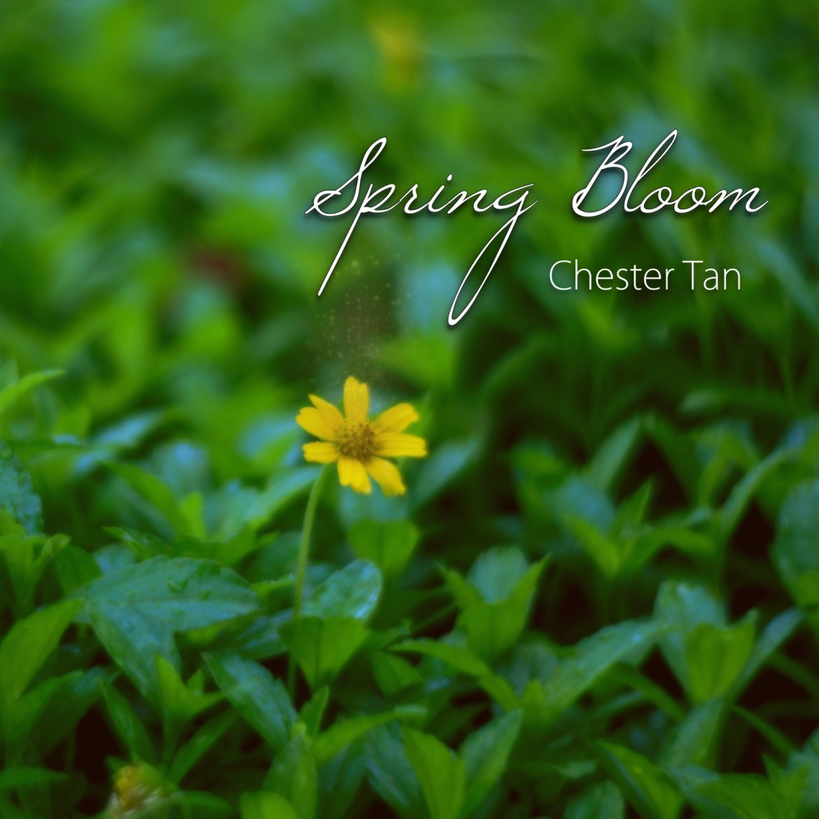 Spring Bloom album by Chester Tan