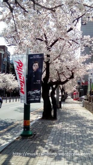 Street banners publicising Musical PHANTOM along a cherry blossom trees-lined street in the city of Daegu, South Korea (2 April 2017).
