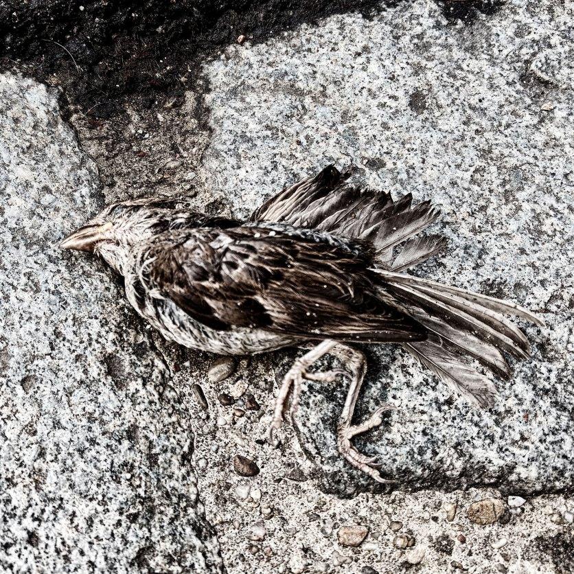 Vogel. Foto: Hufner