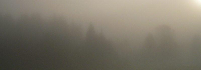 Im Nebel. Foto: Hufner