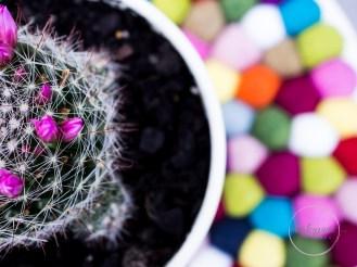 succulentpinkflower-18