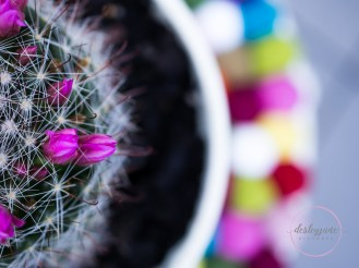 succulentpinkflower-19