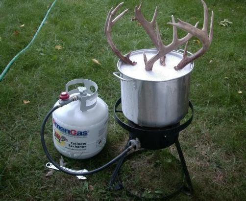 Boil Deer Skull
