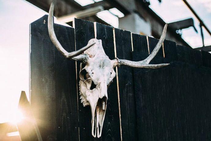 Deer Skull Decor