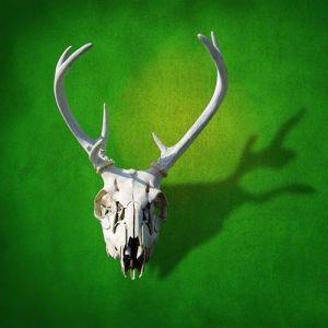 display the antlers