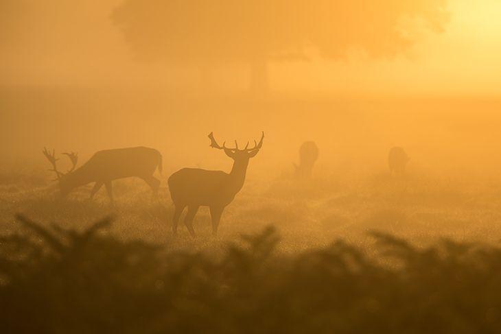 deer hunting at dawn