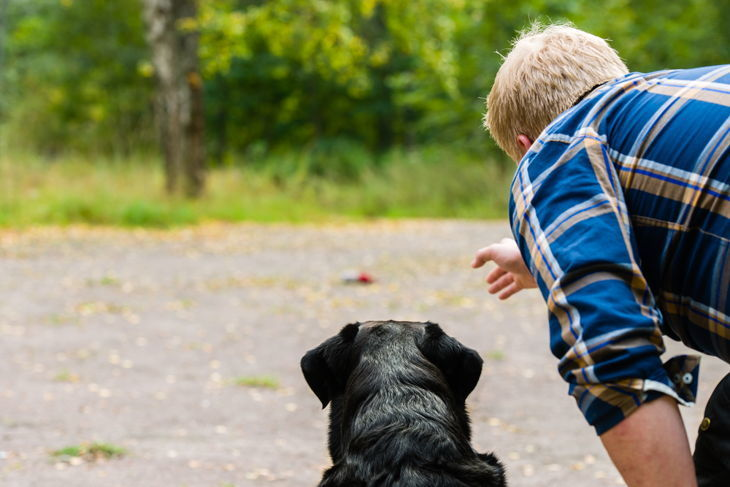 Dog owner trains his labrador retriever