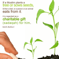 Plant and be Rewarded - A child size sadaqah