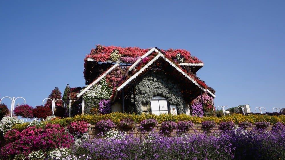 miracle garden dubai1046resized