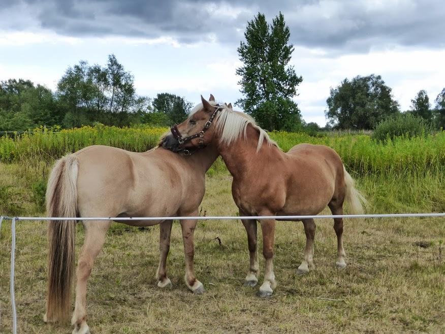 konie w mieście