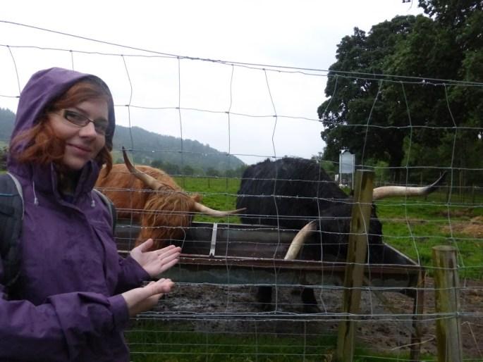 Krowy z grzywkami