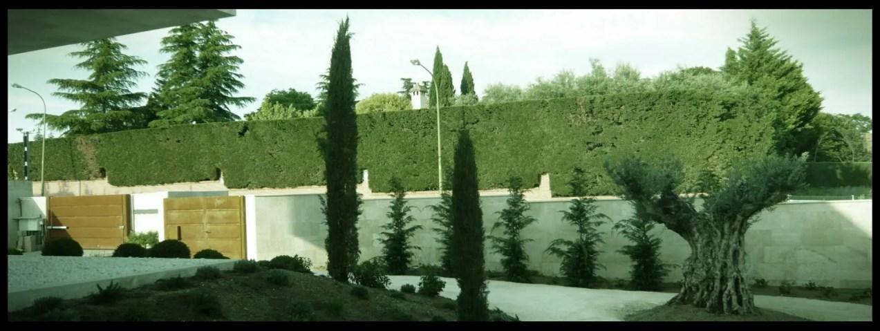olivo centenario jardín aravaca
