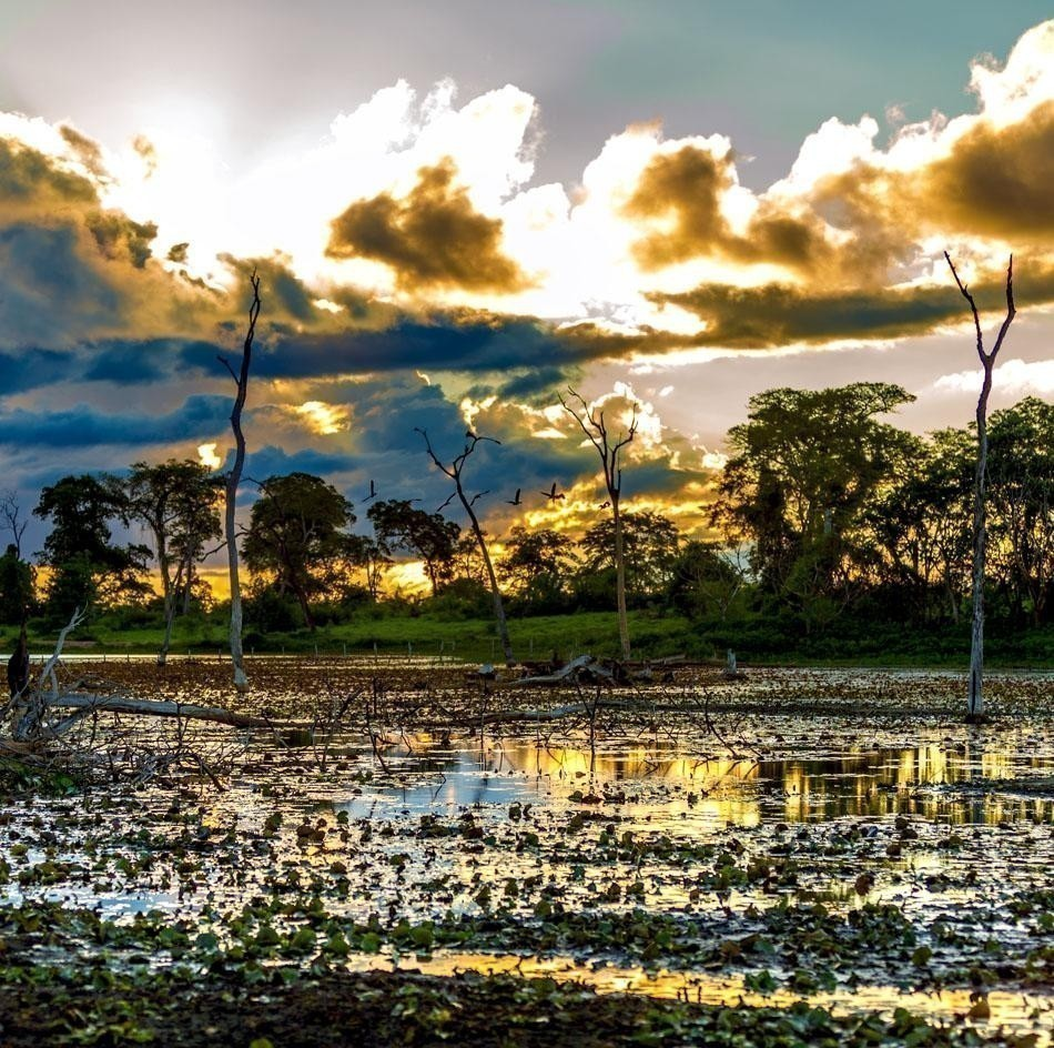 Amazing Pantanal River - Pantanal is one of the world's largest tropical wetland areas located in Brazil , South America | Brazil Travel Guide