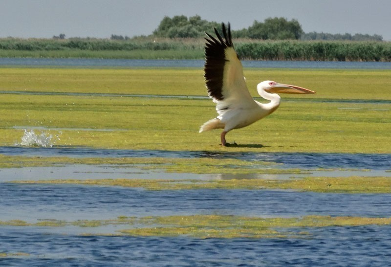 6 Reasons Why You Must Explore Danube Delta at Least Once in Your Life