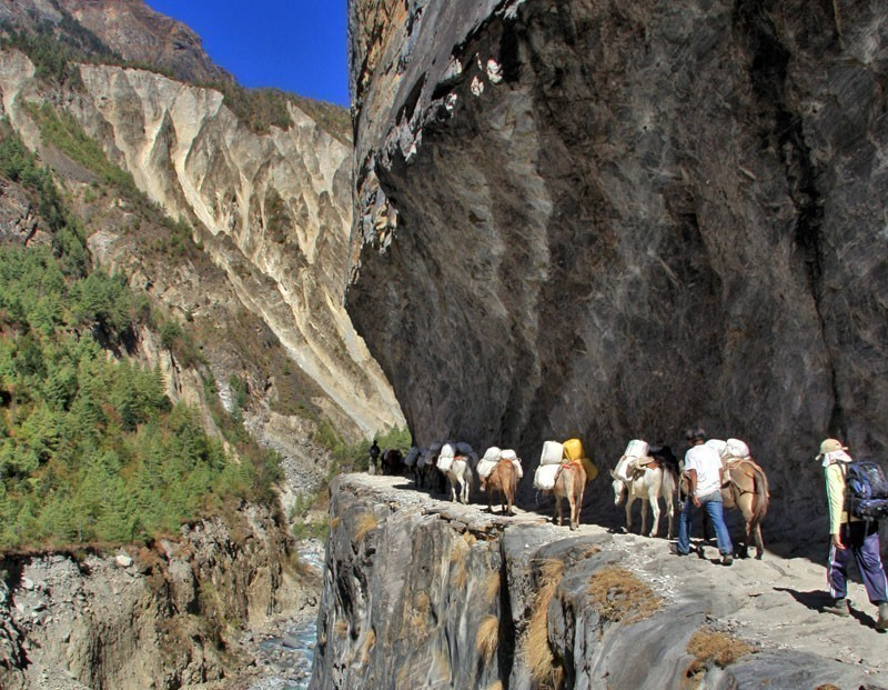 Donkey train in the Annapurna region | 10 Top-Rated Tourist Attractions in Nepal