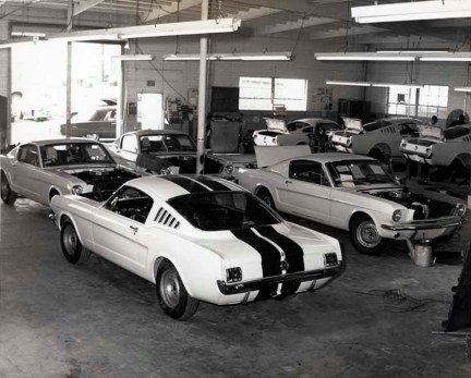 Shelby2