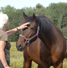 Charlotte is a 29 yr old, big boned 15h bay mare, came to the rescue at the age of 17, had never been handled but has learned to trust and love humans and can be groomed and led.