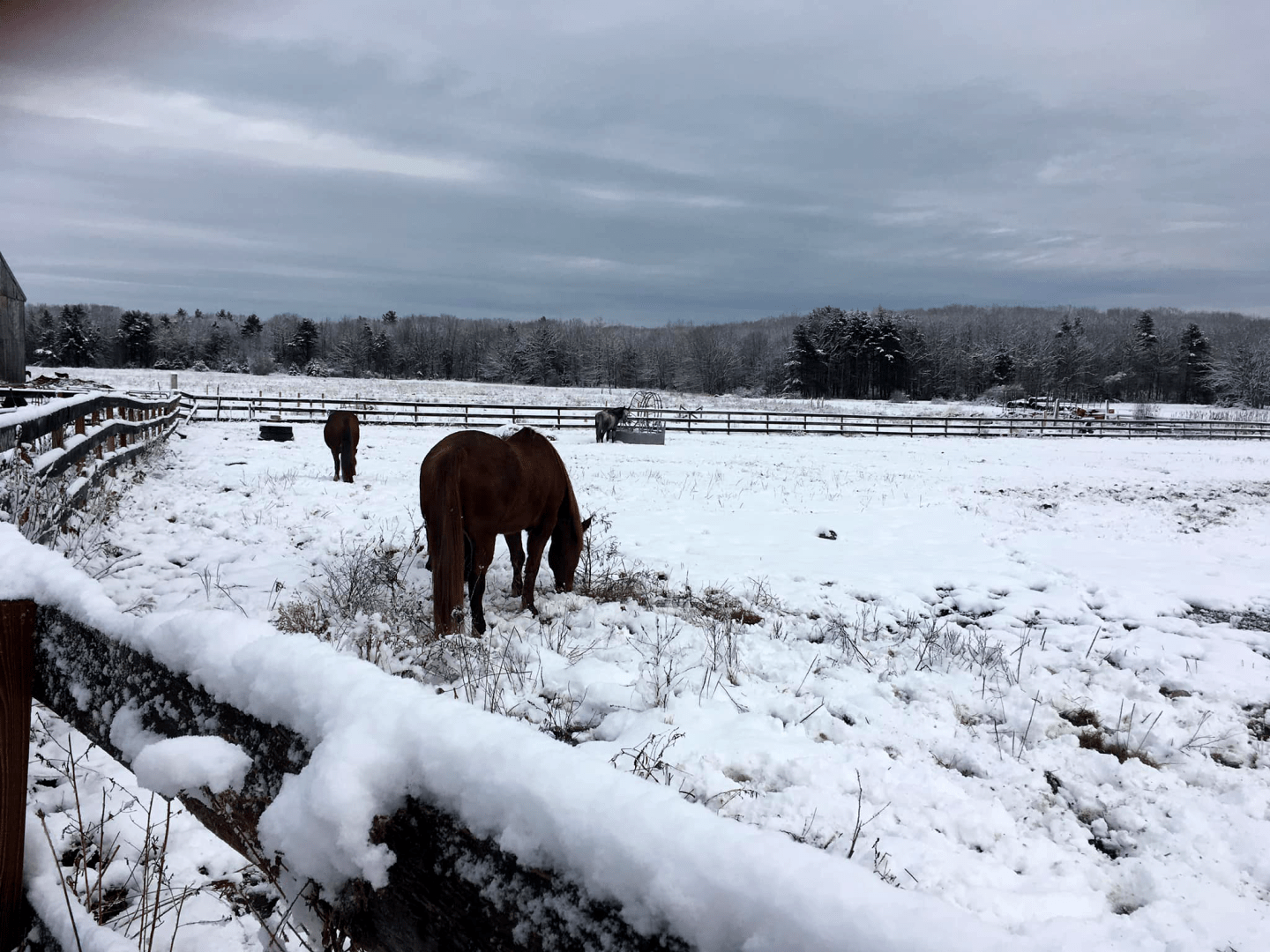 Beautiful view of horses in snowy landscape