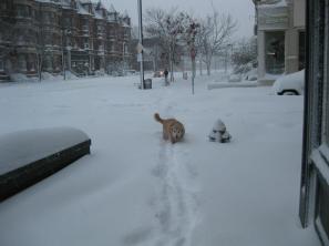 Grady takes a walk