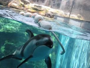 大阪旅遊實記 海遊館