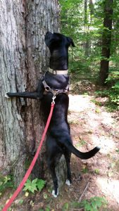 Camping Activities With Your Dog