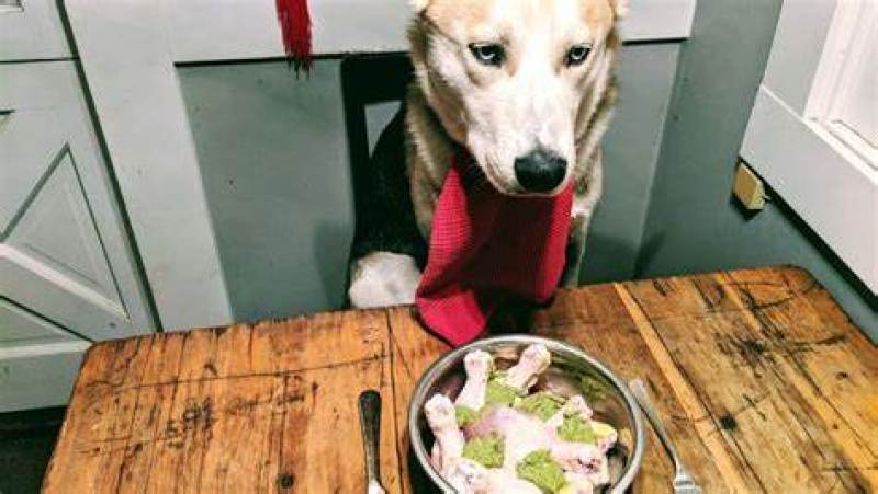 how to cook chicken for a dog