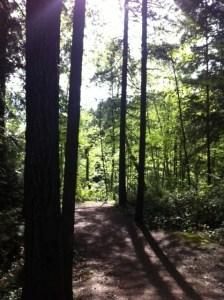 holland creek 1