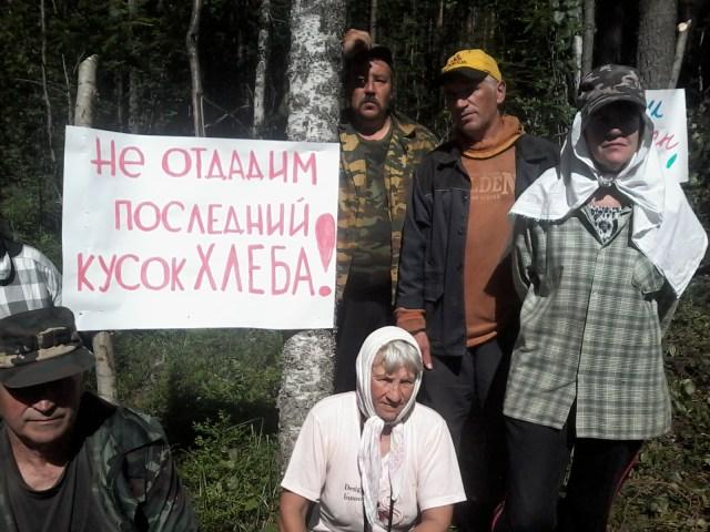 Защитников Сунского бора будут разгонять с полицией? Фото: Татьяна Ромахина