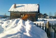 Лесной карельский поселок Маслозеро остался без автобусного сообщения. Фото местных жителей
