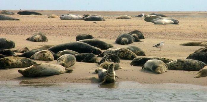 Seal Wadden Sea