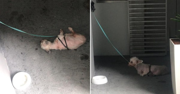 Dog In Holland Village Condo Left Outdoors With Only Bowls Of Water, Netizens Appealing For Help