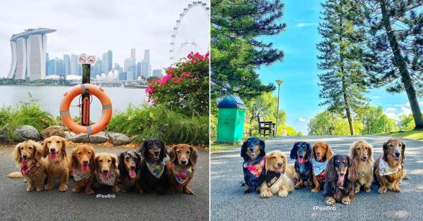 Pack Of Sausage Dogs Visit S'pore Parks & Beaches For Class Outings & It's Wholesome AF