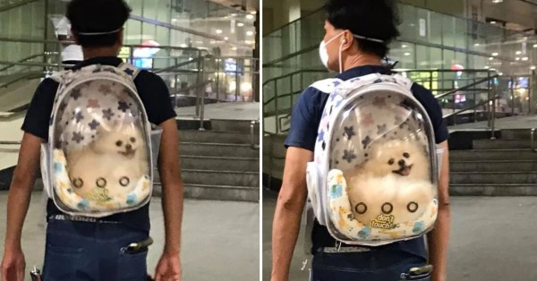 Smiling Dog In Backpack At Farrer Park MRT Is The Perfect Perk-Me-Up For The Week Ahead