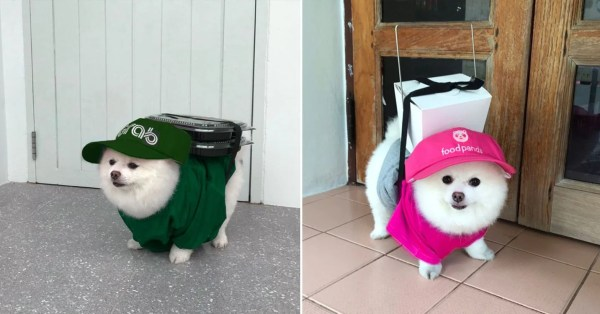 This Cute Delivery Doggo 'Works Hard' To Earn His Own Kibbles In Phase 2