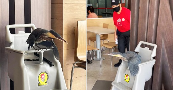 Elusive Bird At McDonald's Tampines Can't Seem To Fly, Gets Rescued & Placed In Kids' High Chair