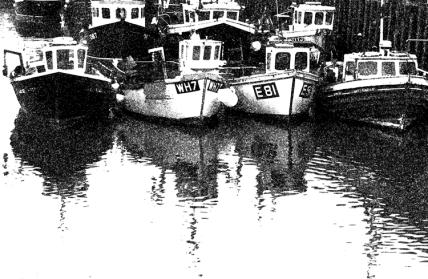 fish boats