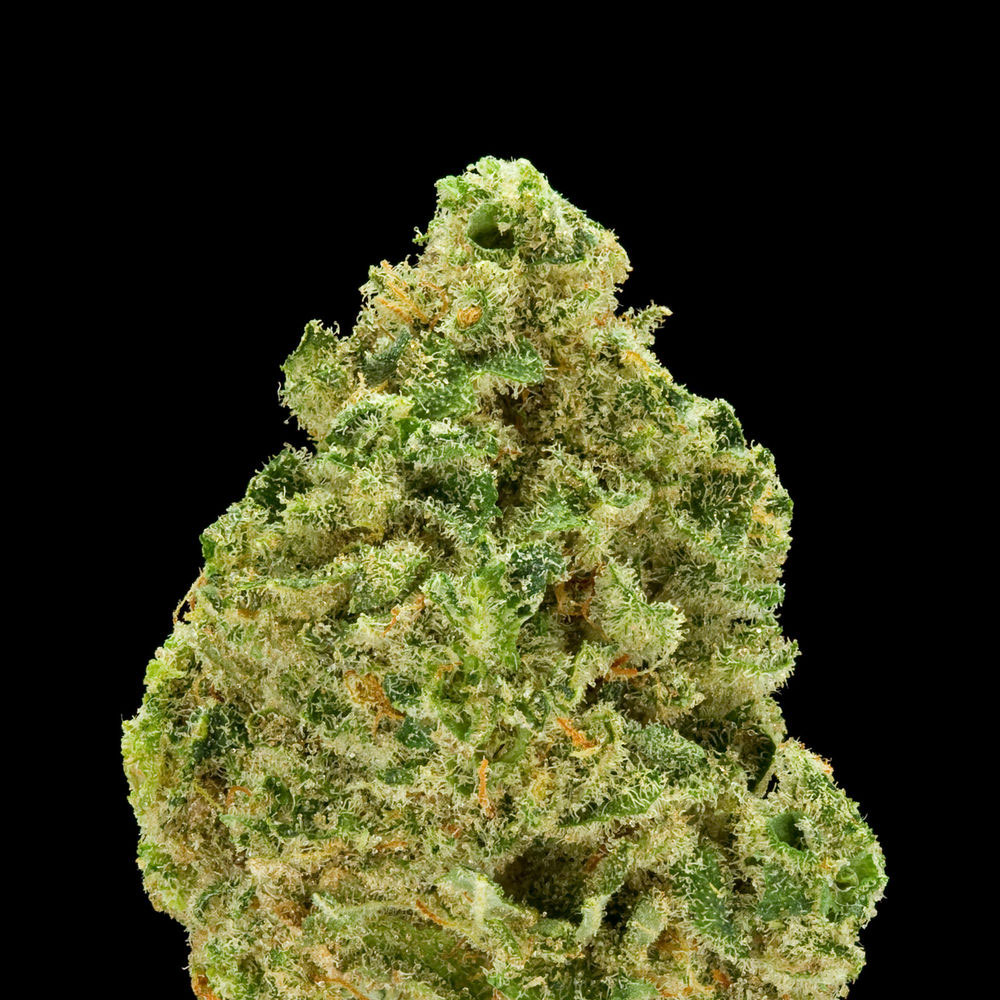 Green--A-Field-Guide-To-Marijuana-02