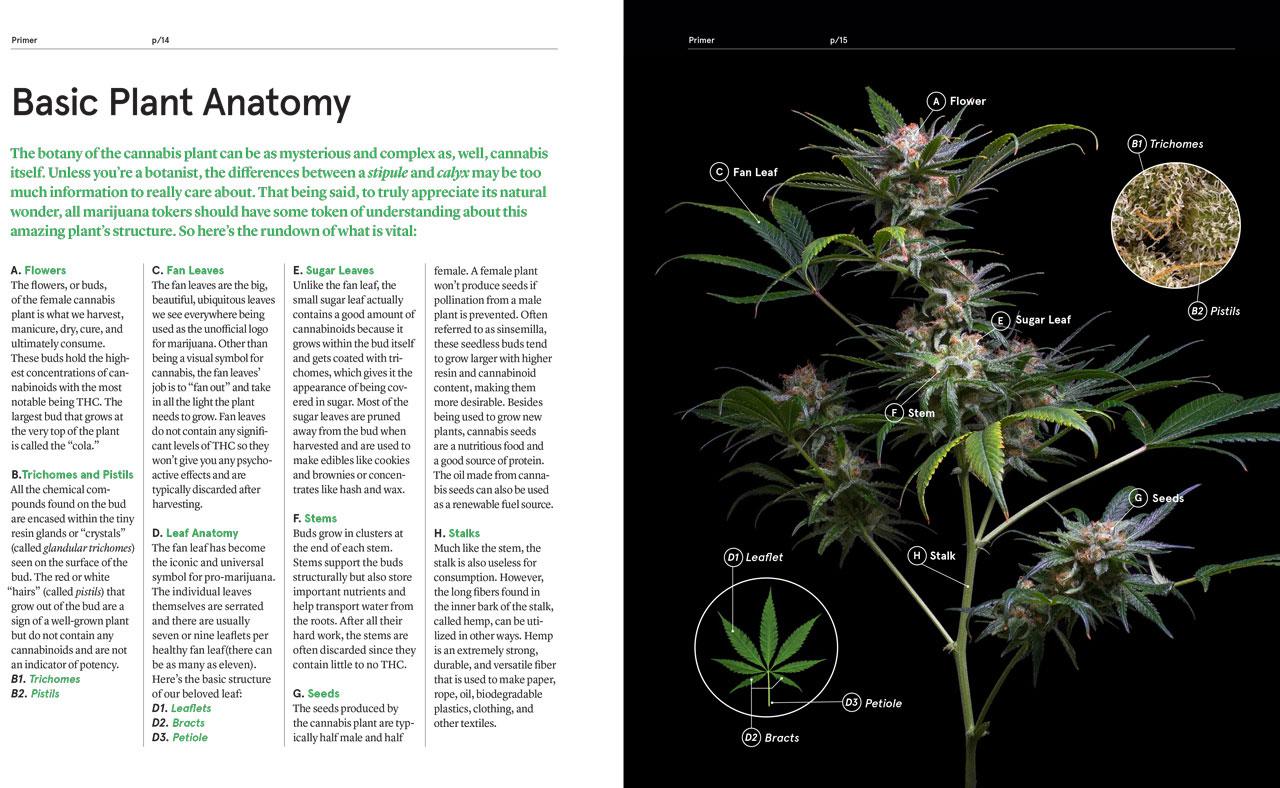 Green--A-Field-Guide-To-Marijuana-06