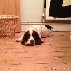 Bracken lying on floor