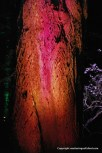Pink and red bark