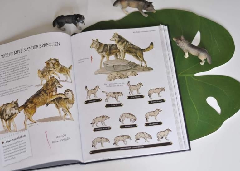 Nele zeltet mit ihrer Klasse im Wald, als sie nachts einen Wolf in der Ferne heulten hört. Doch ist das überhaupt möglich? Nele beschließt, der Sache auf den Grund zu gehen und später vielleicht einen Beitrag über Wölfe für die Kinderbeilage der Lokalzeitung zu verfassen. Ab jetzt tauchen die Leser ein in die geheimnisvolle Welt der Wölfe.  #sachbuch #wolf #wölfe #recherche #zeitung #schreiben #lernen #wald #wolf #lesen #buch #kinder