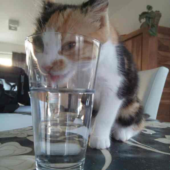 katze trinkt aus wasserglas