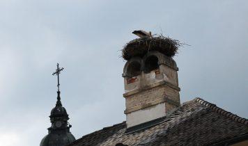rust-storch