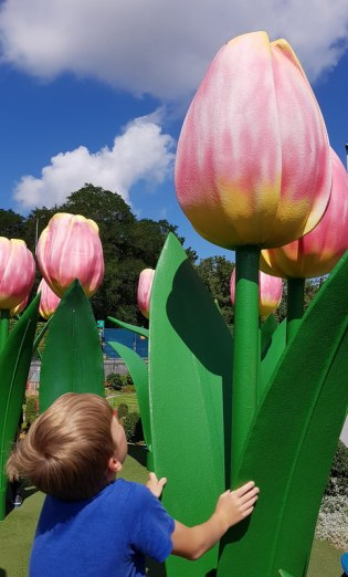 Madurodam: Tulpen