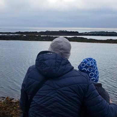 Island mit Kindern: Norden: Robben beobachten