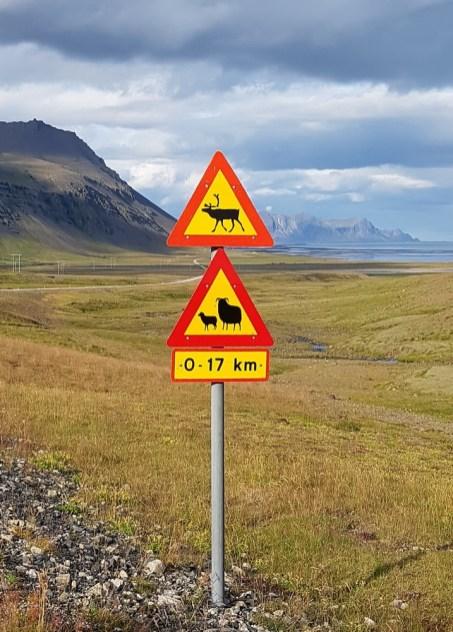 Straßenschild: Achtung Rentier, Achtung Schafe