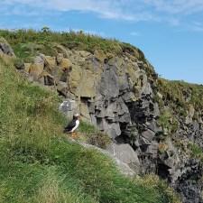 Island mit Kindern: Ringstraße Süden: Dyrholaey mit Papageientaucher
